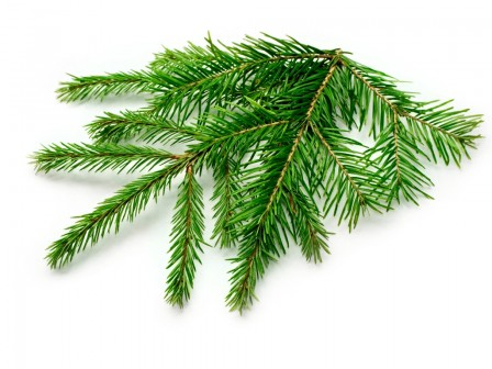 Spruce Needle 50ml
