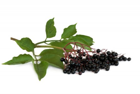 Elderberryseed Oil Organic