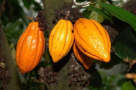 Kakaobutter raff. BIO