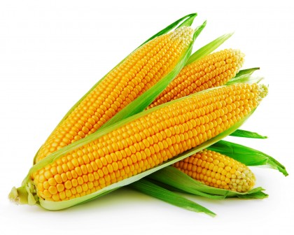 Maize Germ Oil refined