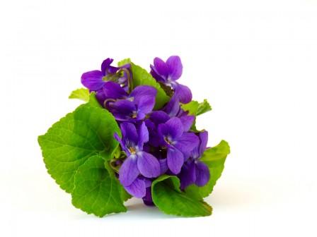 Aceite de Violeta