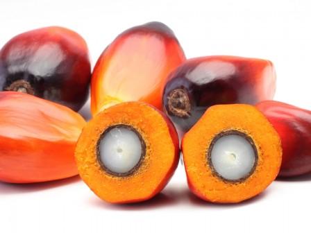 Palmöl Bio 1000g
