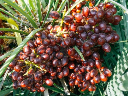 Palm Oil refined
