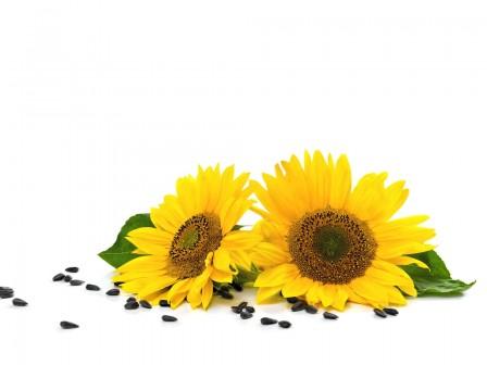 Sunflower Seed Oil Organic  1000ml