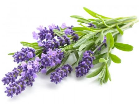 Lavendel 38/40 50ml