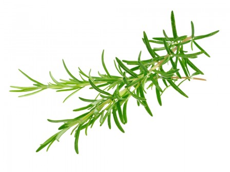 Rosemary Water Organic 500ml