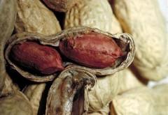 Erdnussöl Bio 250ml Speiseöl
