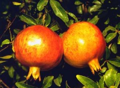 Granatapfel Extrakt Kapseln 60 Stk