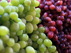 Grape Seed Oil - Refined